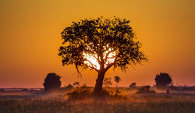 Дерево на заходе солнца в Ботсване Перепад Okavango вышесказанного стоковая фотография rf