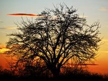 Дерево на заходе солнца Стоковое Фото
