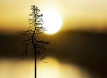 Дерево на заходе солнца Стоковые Изображения