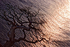Дерево на заходе солнца Стоковые Изображения RF