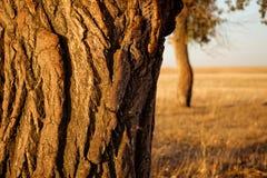 Дерево на заходе солнца стоковая фотография