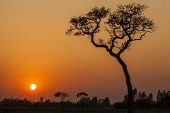 Дерево на заходе солнца Стоковые Фото