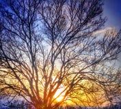 Дерево на заходе солнца Стоковые Фотографии RF