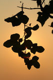 Дерево на заходе солнца Стоковое Изображение