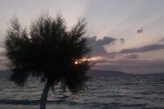 Дерево на заходе солнца, Agistri Tamarisk, Греция Стоковое Изображение RF