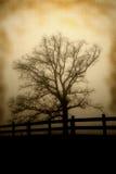 Дерево на линии загородки античном взгляде Стоковое Изображение RF