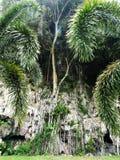 Дерево на камне Стоковая Фотография RF
