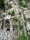 Дерево на камне Стоковая Фотография