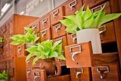 Дерево на коробках шкафа Open деревянных в архиве r библиотеки или опиловки стоковое фото