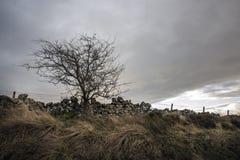 Дерево на крае поля Стоковая Фотография