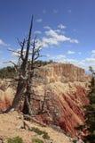 Дерево на крае Стоковые Фото