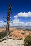 Дерево на крае Стоковые Изображения RF