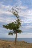 Дерево на море холма Стоковое фото RF