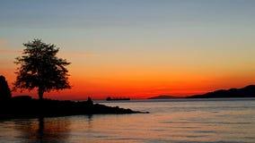 Дерево на море Стоковая Фотография