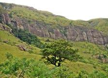Дерево на наклоне горы стоковое изображение rf