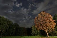 Дерево на ноче, красивое ночное небо Utumn Стоковые Фотографии RF