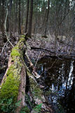 Дерево на озере весны Стоковое Изображение RF