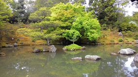 Дерево на озере Стоковые Изображения RF