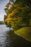 Дерево на озере Стоковые Фото