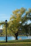 Дерево на озере стоковая фотография rf