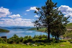 Дерево над озером Стоковая Фотография RF