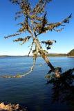 Дерево над океаном Стоковое фото RF