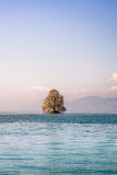 Дерево на острове в озере Стоковые Фото