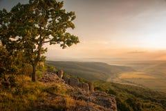 Дерево над долиной солнцецвета Стоковая Фотография