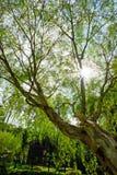 Дерево на парке на прогулке солнечного дня Стоковая Фотография RF