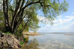 Дерево на побережье озера Стоковое Фото