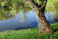 Дерево на побережье реки Стоковое фото RF