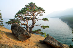 Дерево на побережье Lake Baikal Стоковое Изображение