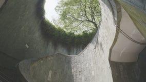 Дерево на подземной лестнице на парке видеоматериал