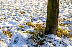 Дерево на поле окруженном травой и снегом Стоковое Фото