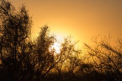 Дерево на предпосылке красивого восхода солнца Стоковая Фотография RF
