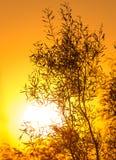 Дерево на предпосылке красивого восхода солнца Стоковое Изображение RF