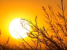 Дерево на предпосылке красивого восхода солнца Стоковые Изображения