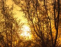 Дерево на предпосылке красивого восхода солнца Стоковые Фото