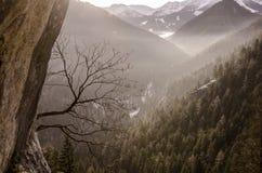 Дерево на предпосылке восхода солнца в высоких горах Стоковое фото RF
