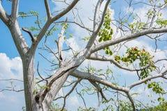 Дерево на предпосылке голубого неба Стоковое Фото