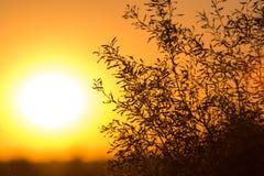 Дерево на предпосылке красивого восхода солнца Стоковое фото RF