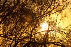 Дерево на предпосылке красивого восхода солнца Стоковые Фотографии RF