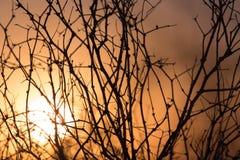 Дерево на предпосылке красивого восхода солнца Стоковые Изображения RF