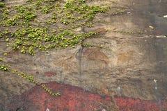 Дерево на предпосылке стены утеса Стоковое Изображение