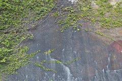 Дерево на предпосылке стены утеса Стоковая Фотография RF