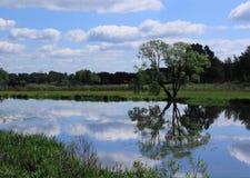 Дерево на пруде Стоковые Фотографии RF