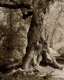 Дерево на пути Стоковые Изображения