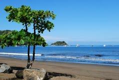Дерево на пляже кокосов Стоковая Фотография