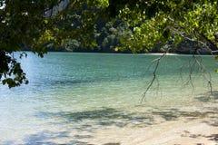 Дерево на пляже Стоковое Фото