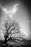 Дерево на пляже Стоковые Изображения